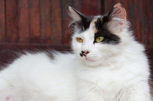 Verhütungsmittel bei Hunden und Katzen und andere Methoden
