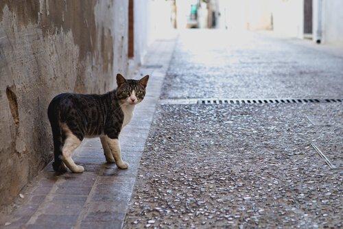 Warum Katzen weggehen und zurückkommen