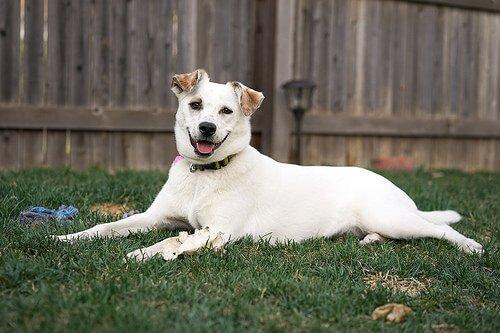 Was ist eigentlich der akute Bauch bei Hunden?