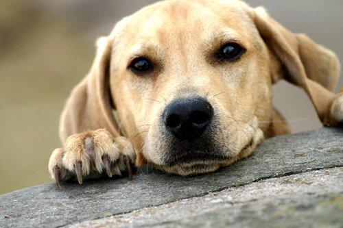 Was solltest du vor der Adoption eines erwachsenen Hundes wissen?