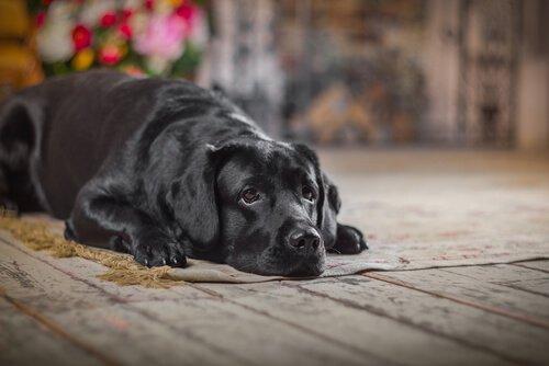 Was tun, wenn der Hund einen Unfall hatte