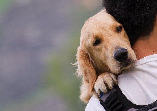 Epileptische Anfälle bei Hunden