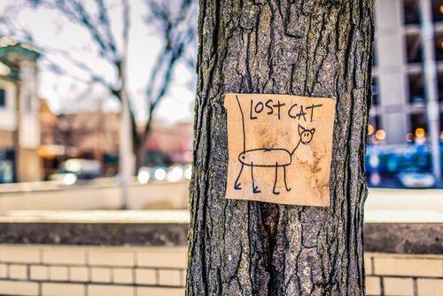 Weswegen Katzen weggehen und zurückkommen.