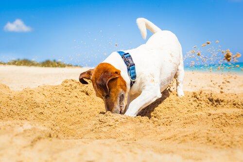 Instinktive Verhaltensweisen sind Handlungen, die Hunde ausführen, ohne sie gelernt zu haben.