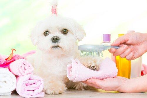 Wie macht man Zahnpasta für Hund eigentlich selbst?