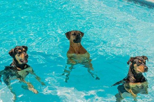 Wie nimmt man Hunden die Angst vor Wasser?