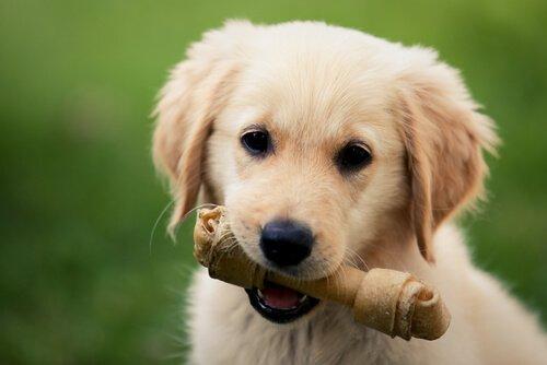 Zahnpflegeknochen für Hunde sollten die richtige Größe haben.