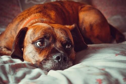 Angst vor Gewitter - Hund im Bett