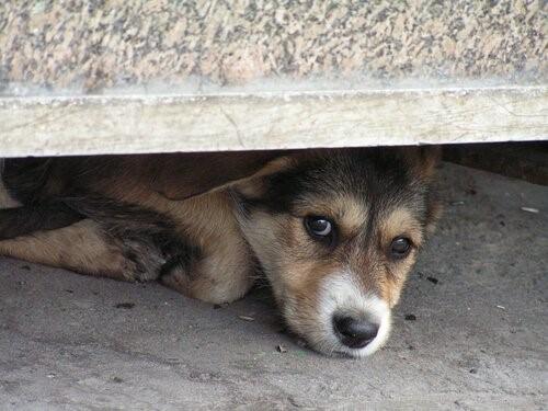 Angst vor Gewitter: Wie kann man einem Hund helfen?
