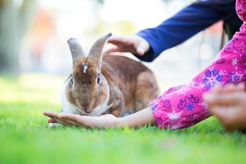 Tiere mit der kürzesten Lebenserwartung