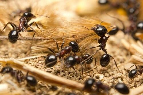 Die Tiere mit der kürzesten Lebenserwartung - Ameise