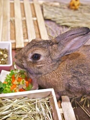 Ein Hase als Haustier - Hase beim Essen