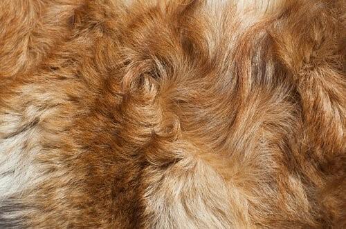 Geruch nach nassem Hund - Hundefell