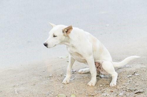 Harninkontinenz bei Hunden - Hund uriniert draussen