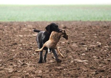 Ist dein Hund ein guter Jäger?