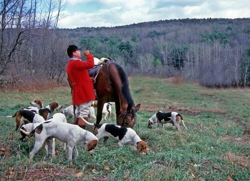 Ist dein Hund ein guter Jäger - Jagd
