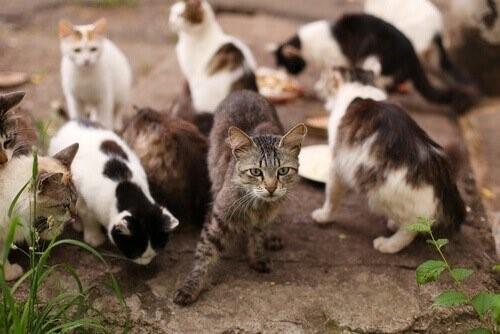 Katzenschnupfen - Katzen