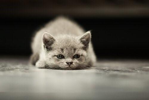Die häufigsten Krebsarten bei Katzen