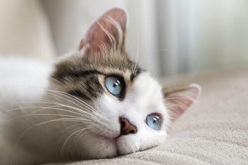 Krebsarten bei Katzen - Kätzchen auf Sofa
