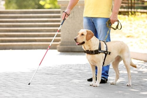 Wie ist das Leben eines Blindenhundes?
