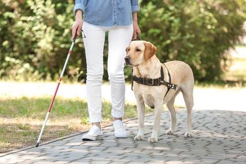 Leben eines Blindenhundes - Im Park