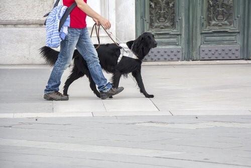 Leben eines Blindenhundes - auf der Strasse
