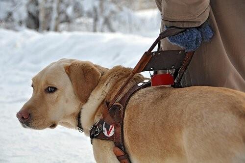 Leben eines Blindenhundes - im Schnee