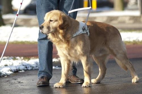 Leben eines Blindenhundes - im Winter