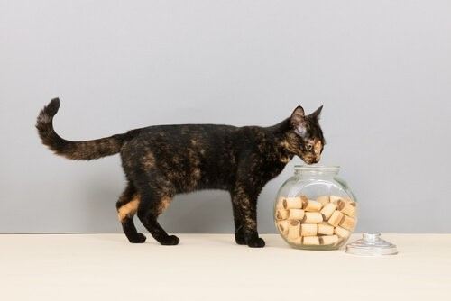 Sieben Lebensmittel, die deine Katze lieben wird - Katze und Kekse