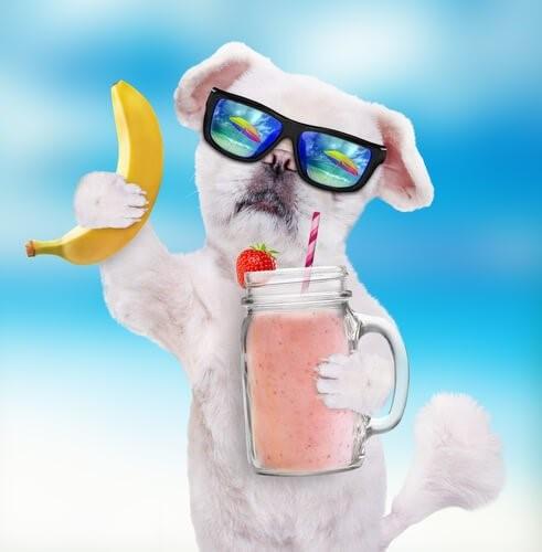 Smoothies für Hunde - Hund mit Smoothie