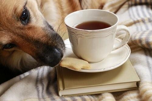 Tipps um zu verhindern, dass dein Hund Essen klaut