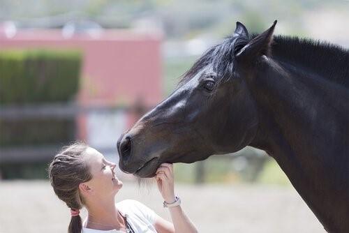 Wer ist Temple Grandin - Pferd