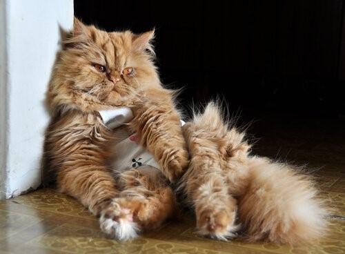 Woran erkennst du, dass deine Katze krank ist?- Katze auf dem Boden