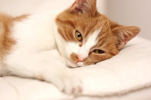 Woran erkennst du, ob deine Katze krank ist?