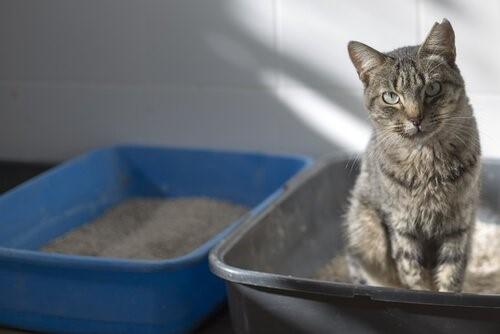 Woran erkennst du, dass deine Katze krank ist? - Katze im Katzenklo