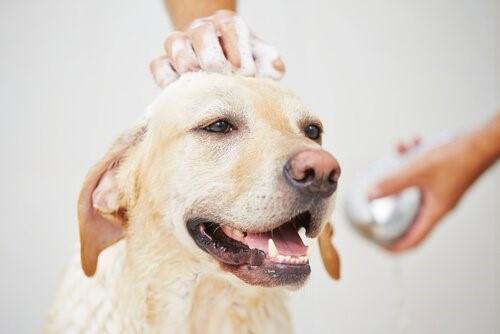 Wie man einen Hund im Winter badet - Hund beim Baden