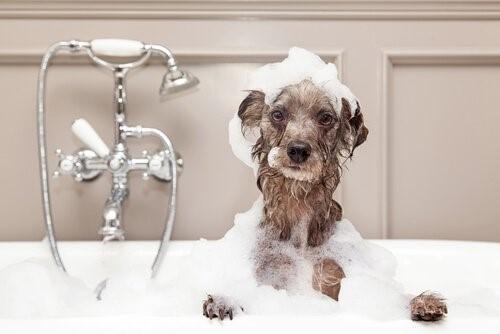 Wie man einen Hund im Winter badet