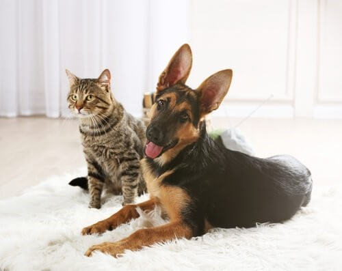 Wie wähle ich eine Katze aus - Katze und Hund