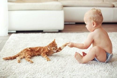 Wie wähle ich eine Katze aus - Lätzchen und Baby