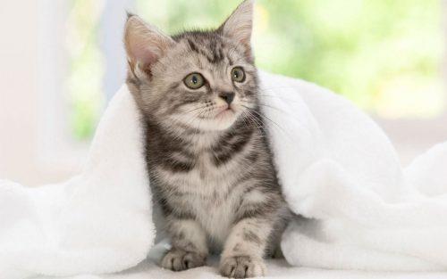 Die Wohnung für die Adoption eines Kätzchens vorbereiten