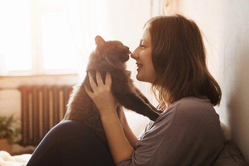 Adoption eines Kätzchens: Was brauchst du?