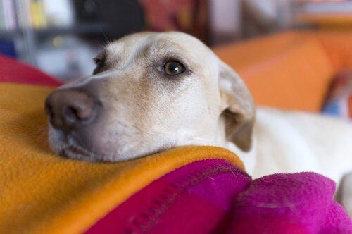 Die Augenuntersuchung beim Hund ist wichtig