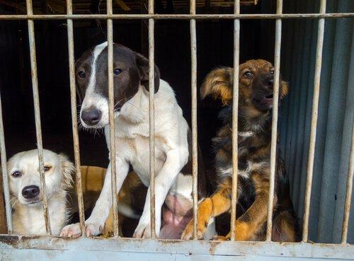 Ausgesetzte Hunde