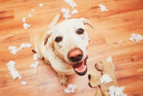 Das Gedächtnis der Hunde