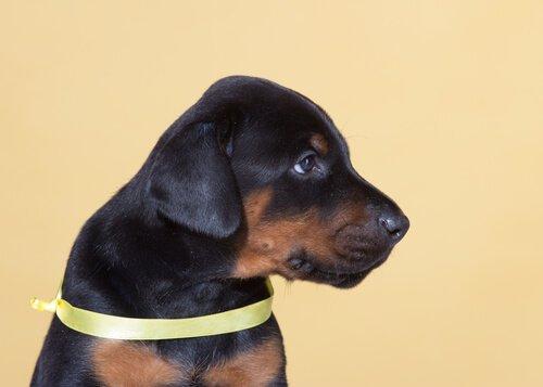 Projekt Gelber Hund: mehr Freiraum für dein Haustier