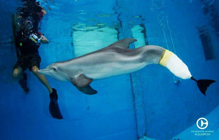Winter, die Delphindame mit Prothese