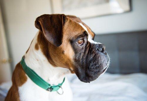 Erkenne die Symptome der Depression bei Hunden
