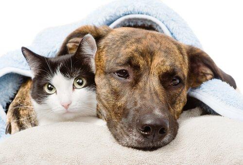 Entzündungshemmende Mittel für Hunde und Katzen