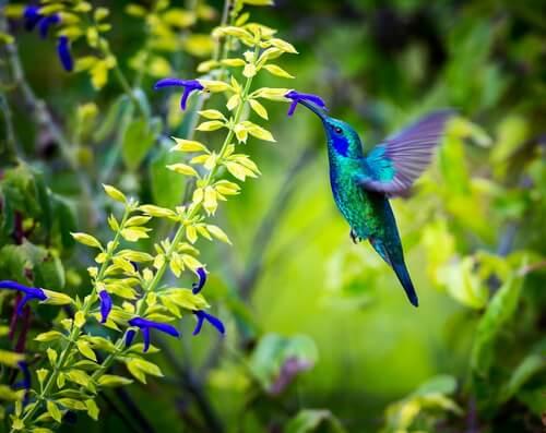 Die aufregenden Farben des Kolibri