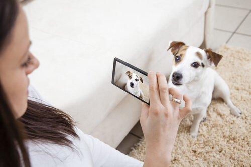 Foto vom Hund